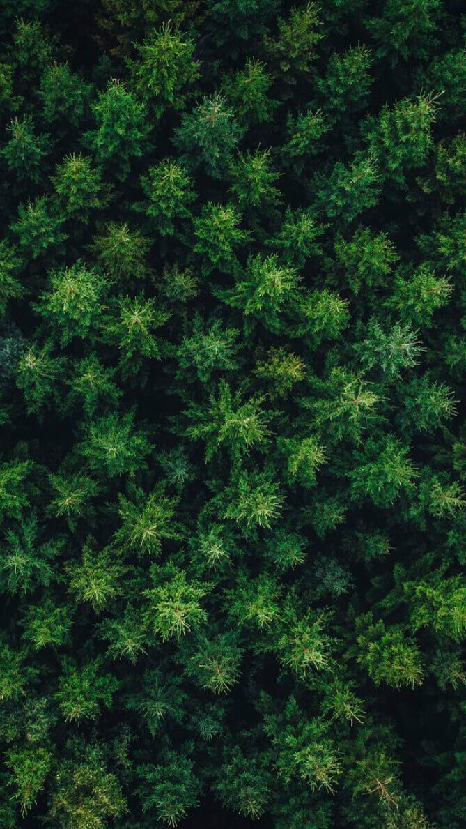 Hneri Woods Drone Wallpaper