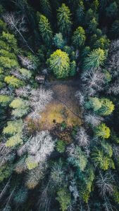 Hneri Falling Leaves Drone Pictures