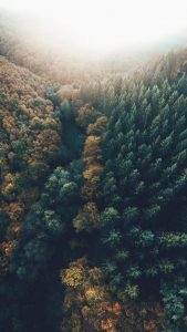 Lennart Forest Drone Wallpapers