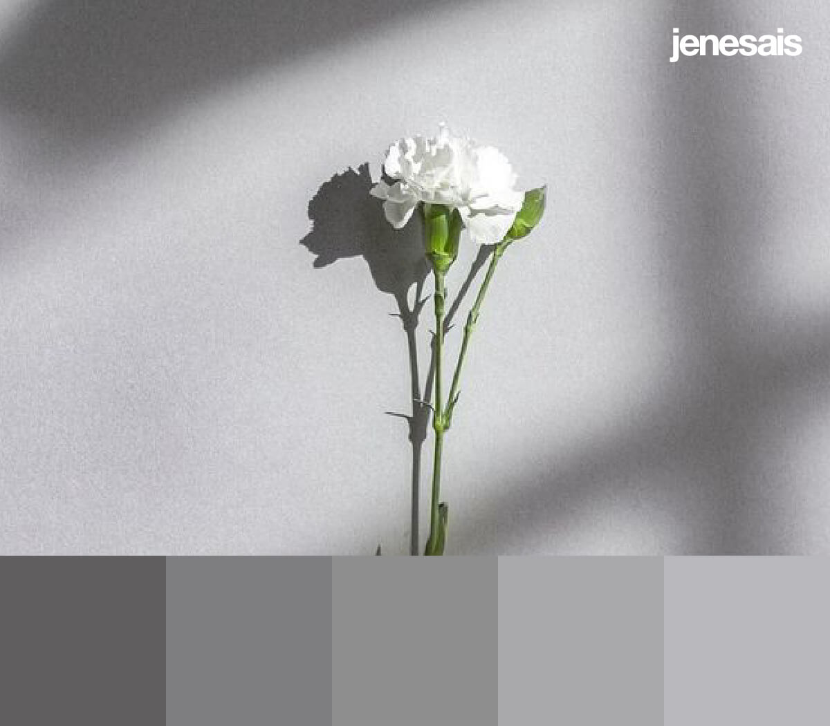 Aesthetic Grey Color Palette