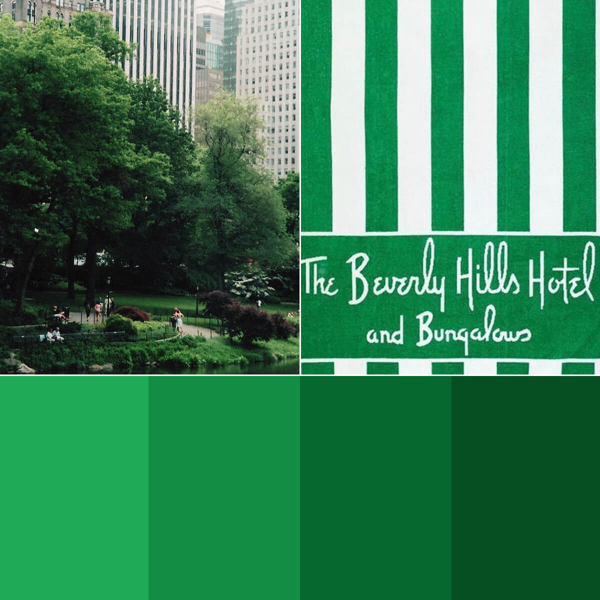 Forest Green Color Palette